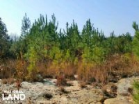Lumber River Hunting Land