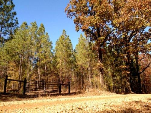 158 Acres Of Timberland : Starkville : Oktibbeha County : Mississippi