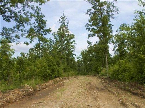 9.19 Acre : Birch Tree : Shannon County : Missouri
