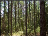 202.00 Acres Hunting Land, Timber