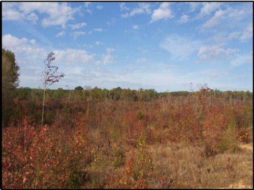 149 Acres In Attala County : Kosciusko : Attala County : Mississippi