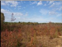 149.00 Acres Hunting Land, Pasture
