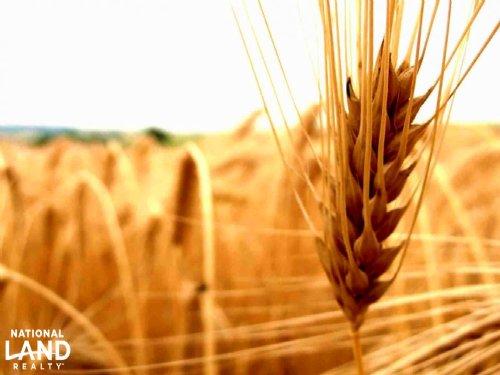 Cheyenne County Crop Land For Sale : Cheyenne Wells : Cheyenne County : Colorado