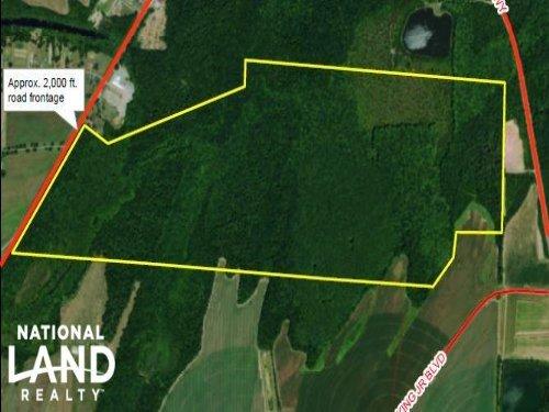 Culver Road Timber & Recreation : Tuscaloosa County : Alabama
