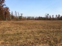 30 Acres - Pasture - Creek : Odenville : St. Clair County : Alabama