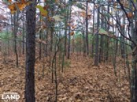 10+/- Acres Of Timberland And Deer