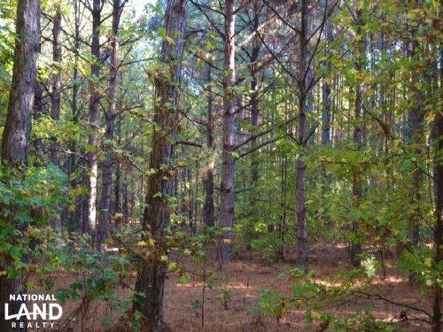 117+/- Acres Pine Plantation Timbe : Lacey : Drew County : Arkansas