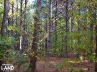 117+/- Acres Pine Plantation Timbe