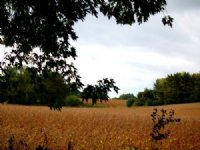 20 Amazing Acres South Of Madison : Madison : Dane County : Wisconsin