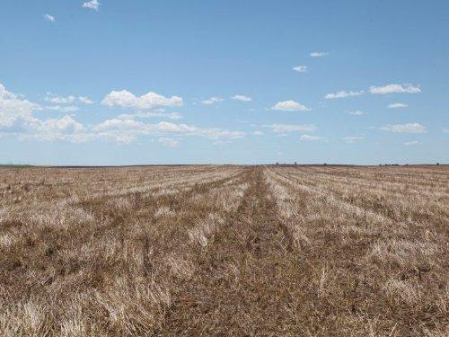 Leader Dryland For Sale : Bennett : Adams County : Colorado