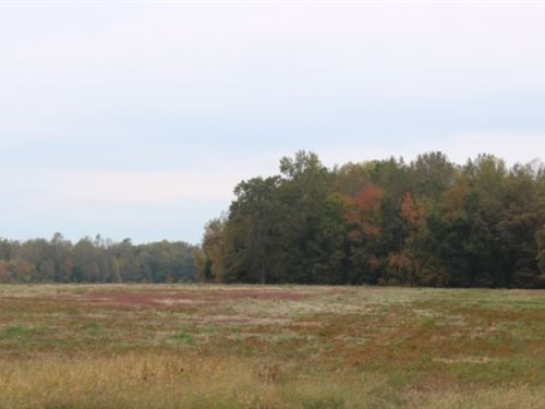 Bell Acres, 5.30 Acre Lot : Morrison : Coffee County : Tennessee