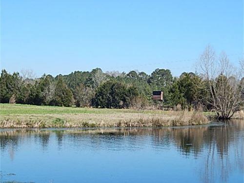 286 Acres In Jasper County : Heidelberg : Jasper County : Mississippi