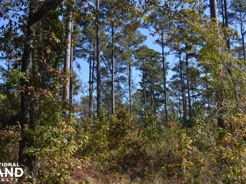 39 Acre Natural Re-Growth Timber : Lacey : Drew County : Arkansas