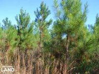 20+/- Acres Hunting Land & Natural
