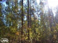 40+/- Acres Timberland & Deer Hunti