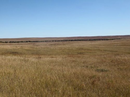 Matheson Pasture : Matheson : Elbert County : Colorado