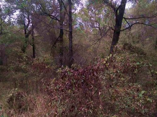 20 Acres / 30499 : Clarksville : Red River County : Texas