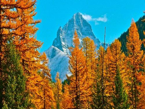 Glacier Haven : West Glacier : Flathead County : Montana