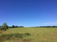 Hunting + Pasture $1,295/acre