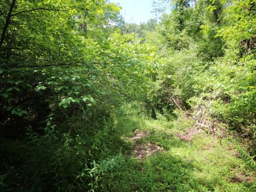 68 +/- Acres Land In Muncy : Muncy : Lycoming County : Pennsylvania
