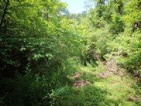 68 +/- Acres Land In Muncy