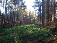 77 Acres Of Timberland