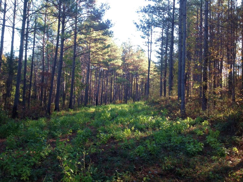 77 Acres Of Timberland : Fayette : Fayette County : Alabama