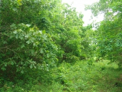 5 Acres Whispering Oaks Ranch : Houston : Texas County : Missouri