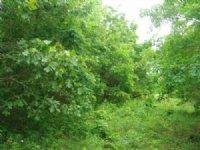 5 Acres Whispering Oaks Ranch