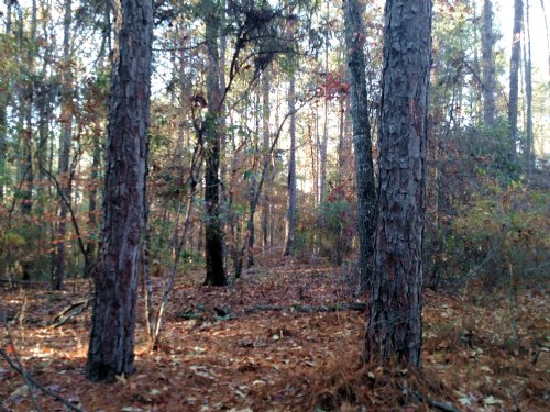 59 Acres Near The Flint River : Americus : Sumter County : Georgia