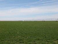 Pivot Irrigated : Imperial : Chase County : Nebraska