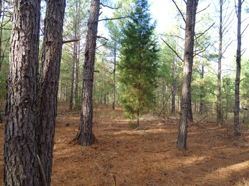6 Acres - $208/Month : Bartow : Washington County : Georgia