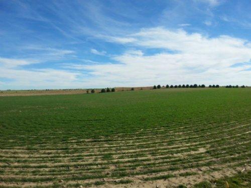 J Triple D Farmland & Pasture : Dix : Kimball County : Nebraska