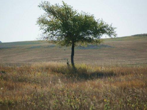 Bowles Crp : Kimball : Nebraska