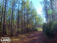Recreational And Timber Investment : Abbeville : Abbeville County : South Carolina