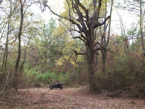 Good Farmland Near Huntsville : New Hope : Madison County : Alabama