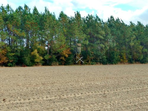 33 Ac Farm With Prime Hunting : Salters : Williamsburg County : South Carolina
