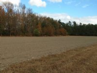 73 Ac Farm With Prime Hunting : Salters : Williamsburg County : South Carolina