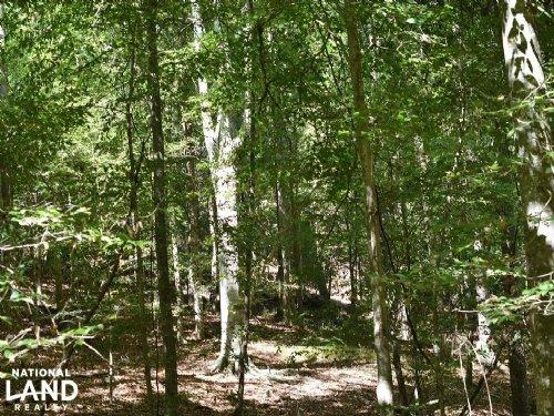 The Hillcrest Farm 23 Acres : Tuscaloosa : Alabama