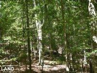 The Hillcrest Farm 23 Acres : Tuscaloosa : Tuscaloosa County : Alabama