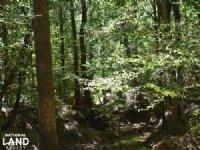 The Coleman Farm 10 Acres : Tuscaloosa : Tuscaloosa County : Alabama