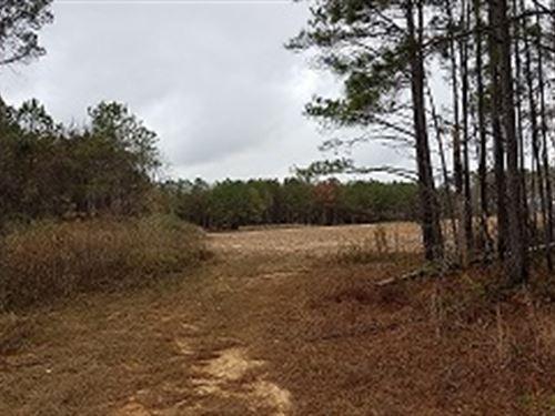 151+/- Ac Farmland : Abbeville : Henry County : Alabama