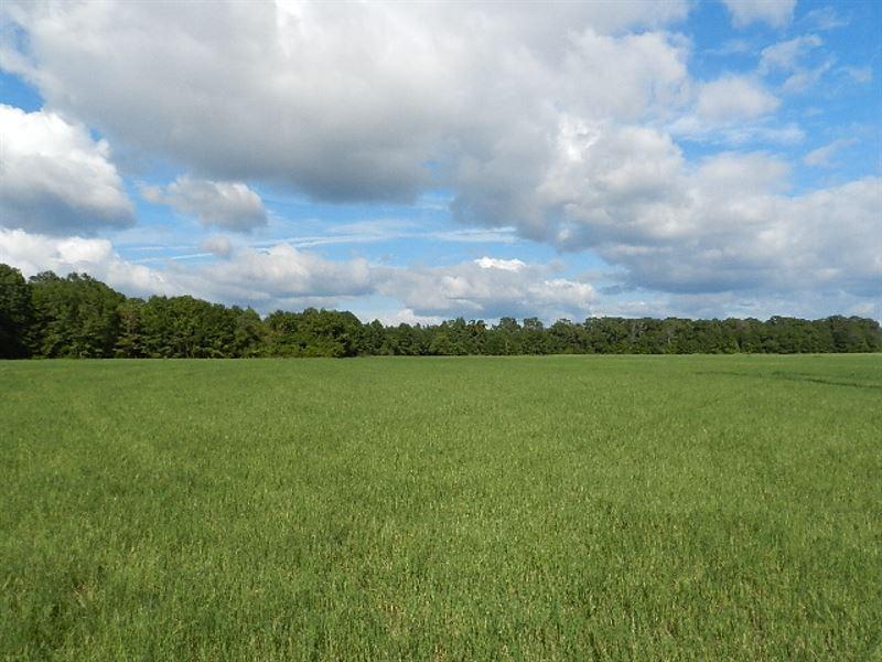 Hardwoods-Pines-Open Land : Gray : Jones County : Georgia