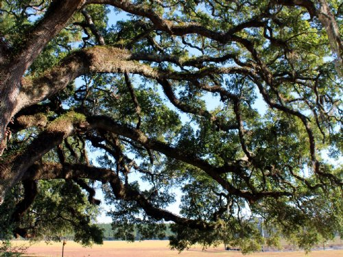 Good Hope Property : Ravenel : Charleston County : South Carolina