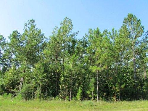 292 Ac Off Post Oak Rd. : Kountze : Hardin County : Texas