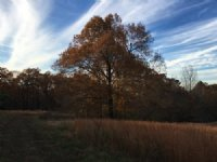 120 Acres +/- Rolling Hills : Paragould : Greene County : Arkansas