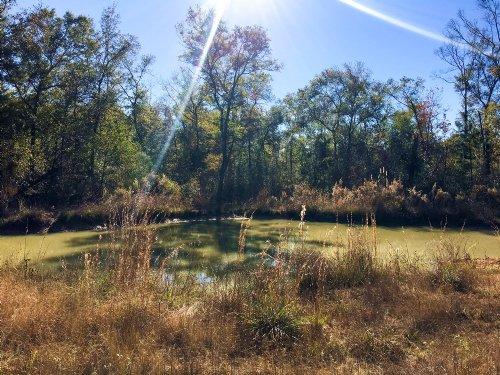 89.2 Ac Southwind Trail : Cleveland : San Jacinto County : Texas