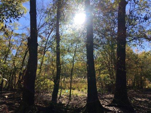92.7 Ac Southwind Trail : Cleveland : San Jacinto County : Texas