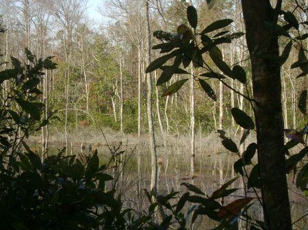 Deepstep Woods : Sandersville : Washington County : Georgia