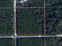 10 Acres - Nice Wooded Square Lot : Ft White : Columbia County : Florida